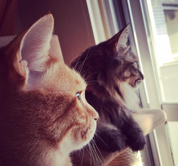 猫ブログ猫話に登場するにゃんだむとアンのかわいい猫画像