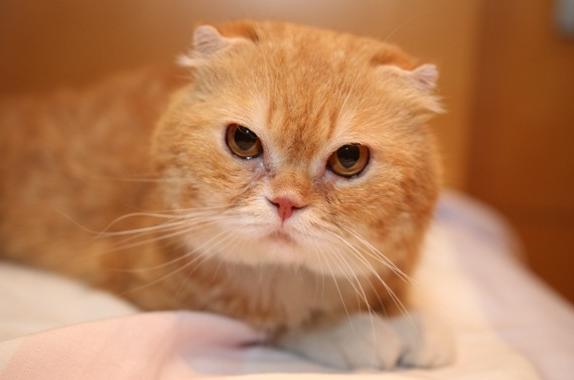 高台家の人々映画の猫ティティ